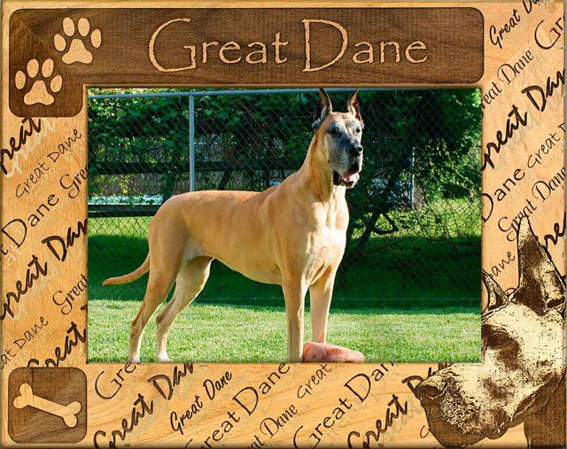Great Dane Cropped Wood Frame Photo Frames For Great Danes