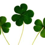 St. Patrick's Day Facts That Are Sure to Bring You Luck!